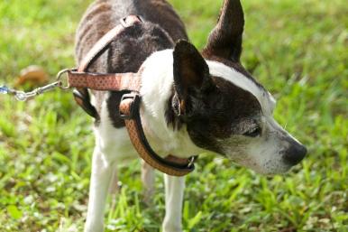 lost dog Julie