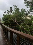 Hurrican Irma 24