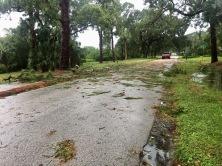 Hurrican Irma 29