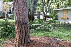 Hurrican Irma 3